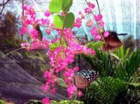 Butterfly Garden Samui