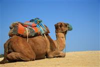 Camila in desert