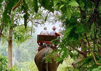 Elephant Trekking in Koh Samui