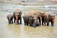 Familie de elefanti din Sri Lanka