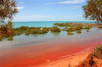 Golful Roebuck, Broome