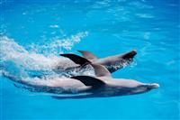 Inot cu delfinii
