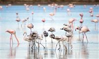 Lacul sarat Larnaca