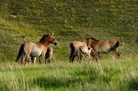 Parcul National Hustai