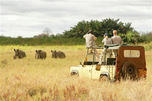 Exceptional Safari